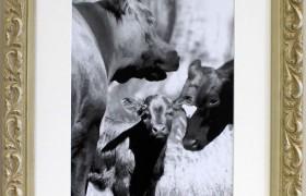Fleur White 20x16 Photo Frame