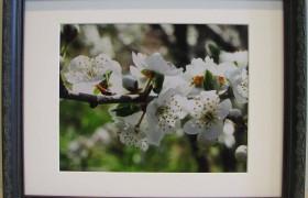 French Ebony 14x11 Photo Frame